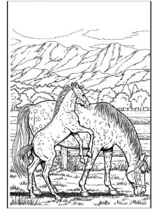 Wild Horse Coloring Pages