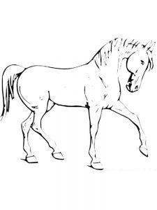 Wild Horse Colouring Pages