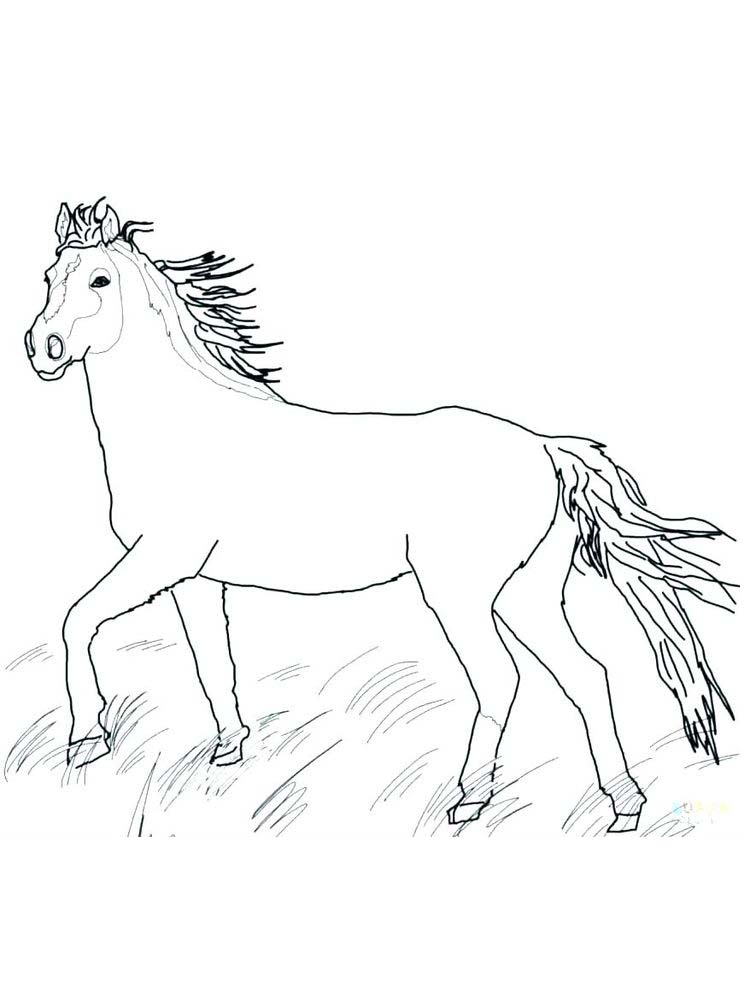 Wild Horses Coloring Book