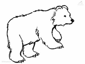 Wild polar bear coloring pages