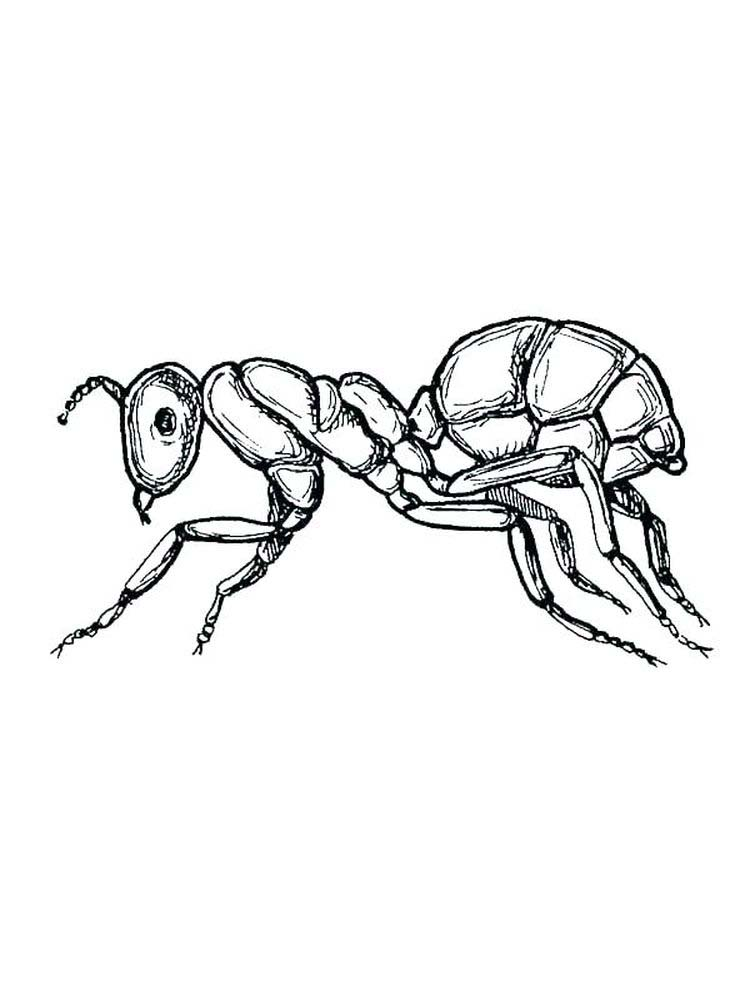 a is for ant coloring pages