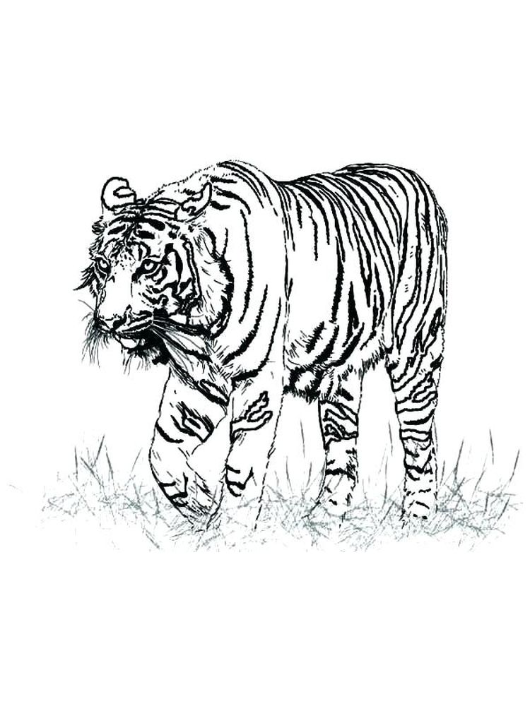 animals coloring pages free