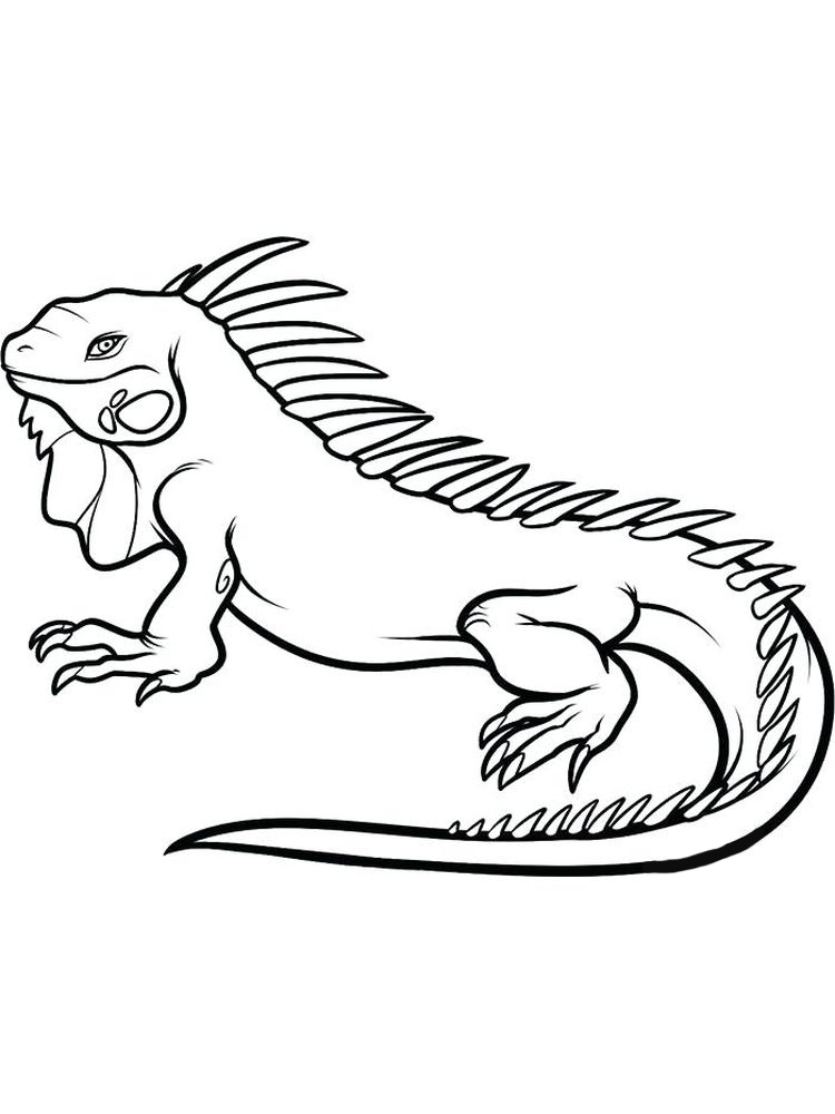 animals free coloring pages