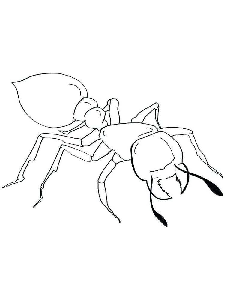 ant coloring pages for toddler