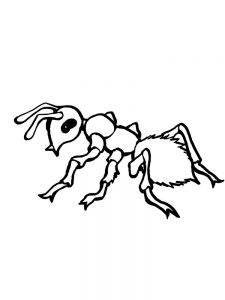 ant coloring pages to print