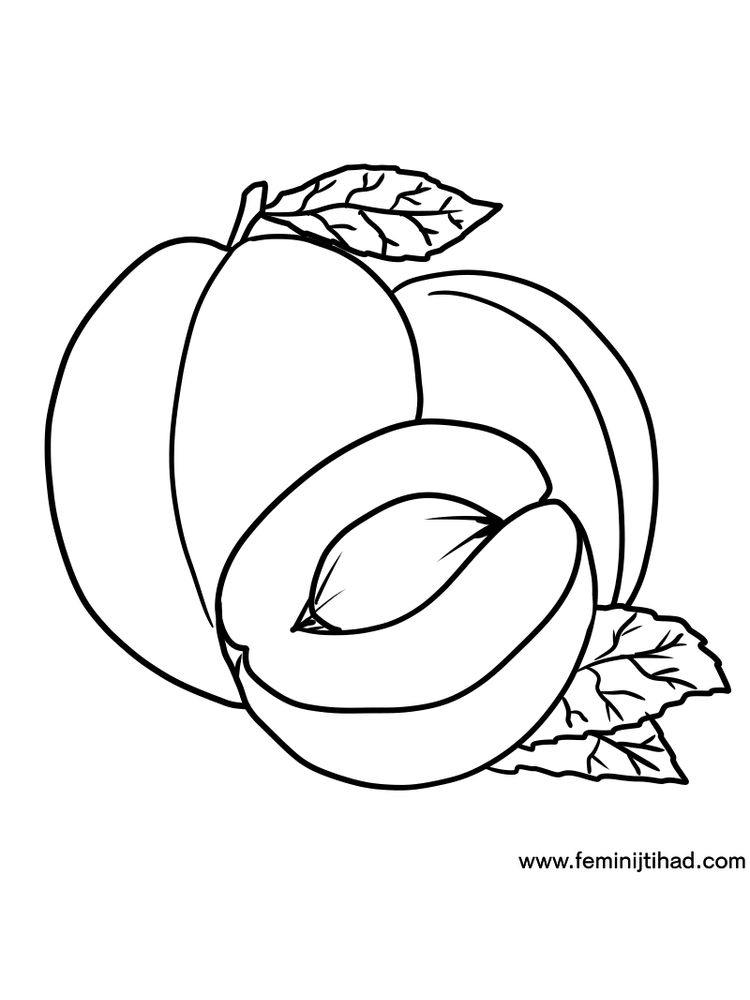 apricot coloring page print