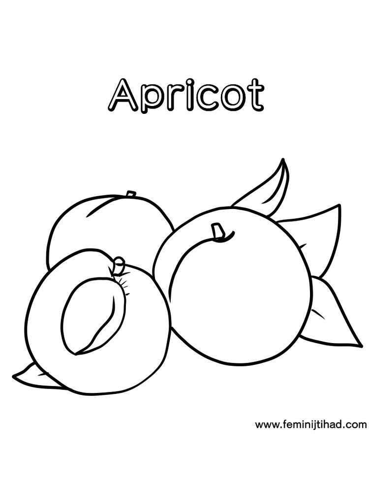 apricot coloring page printable