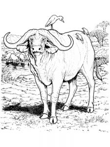 baby buffalo coloring pages