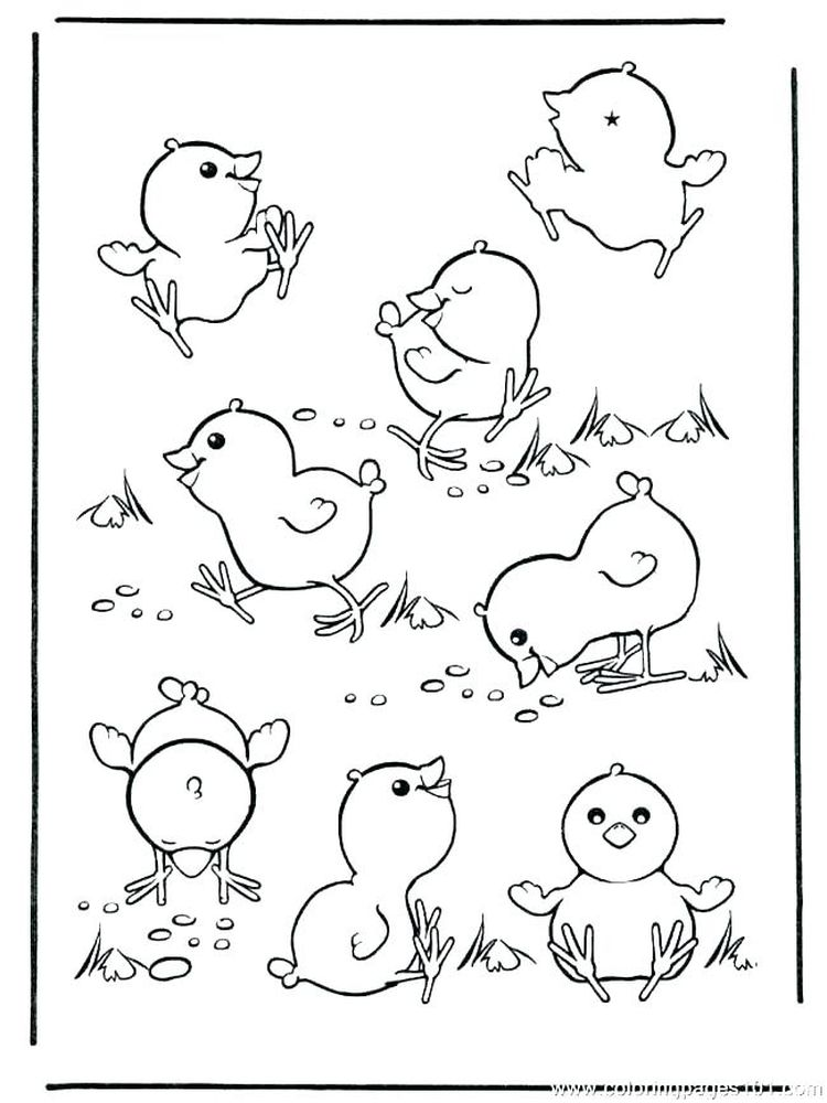 baby chick coloring pages free
