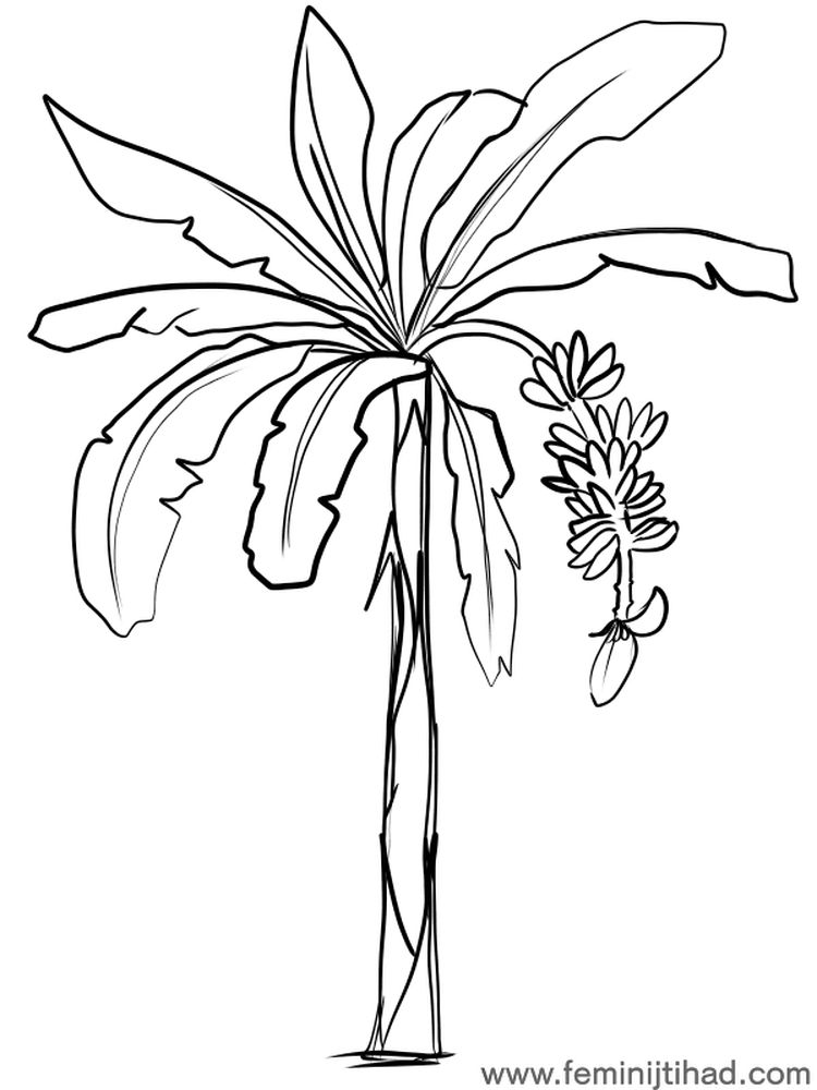 banana tree coloring page print