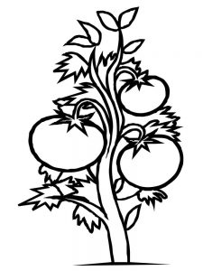bean plant coloring page