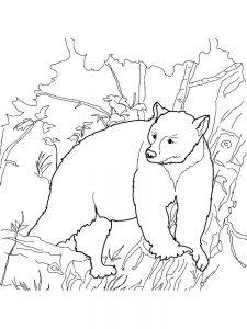 bear blank coloring pages