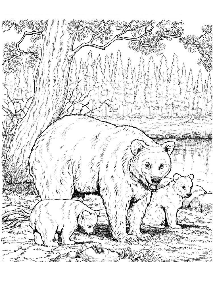 bear coloring pages adults