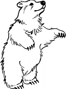 bear coloring pages for kindergarten