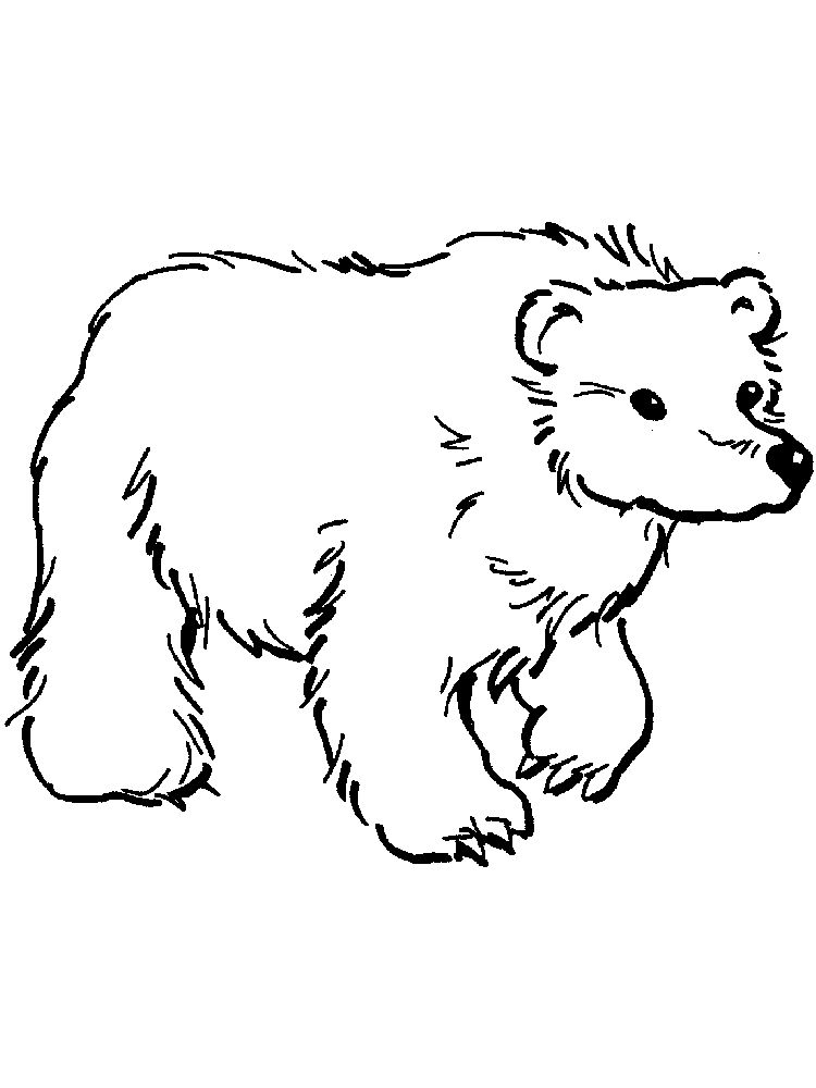 bear coloring pages for preschoolers