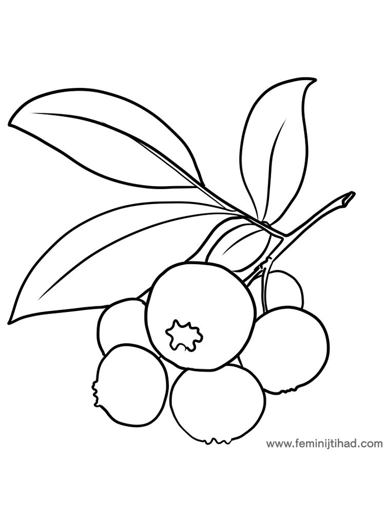 bilberry coloring page pdf