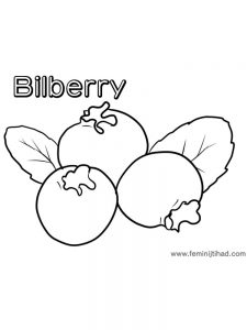bilberry coloring page print