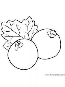 black currant coloring page for print pdf