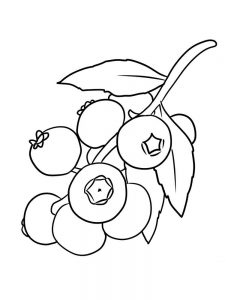 blueberry coloring page for print free