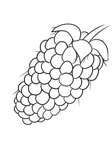 boysenberry coloring image free online