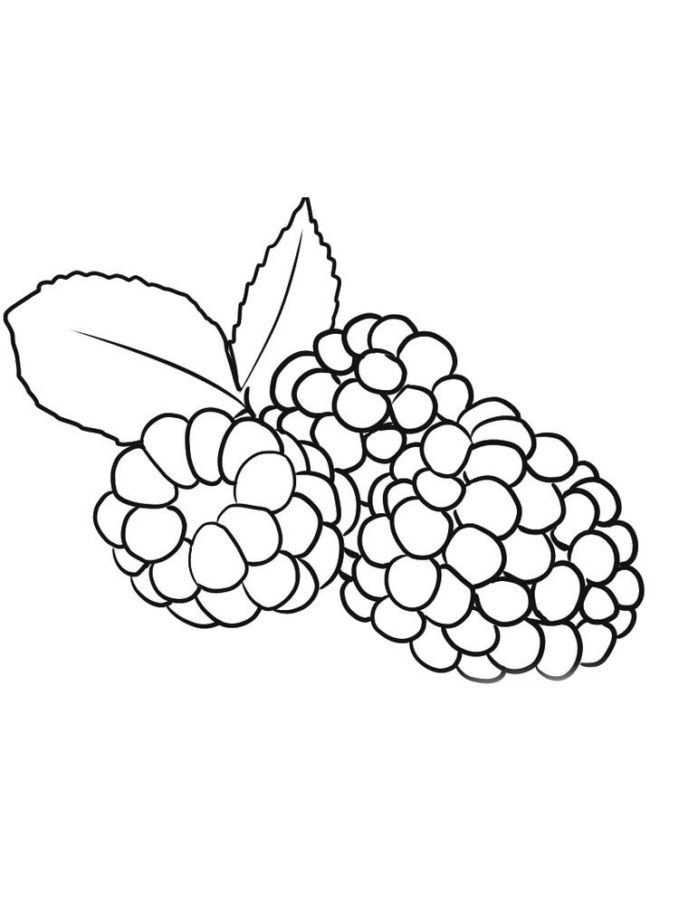 boysenberry coloring images free