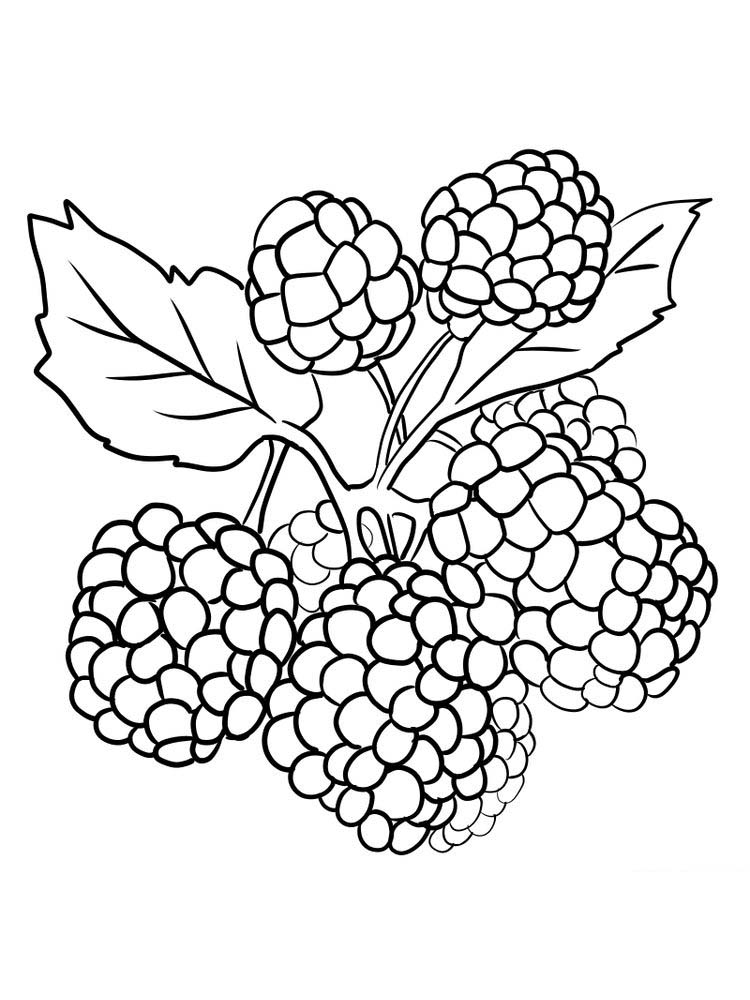 boysenberry coloring page print