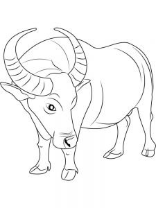 buffalo coloring pages to pdf