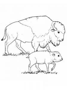 buffalo coloring pages to print
