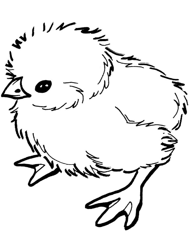 chick coloring pages 002