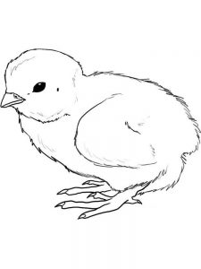 chick coloring pages 030