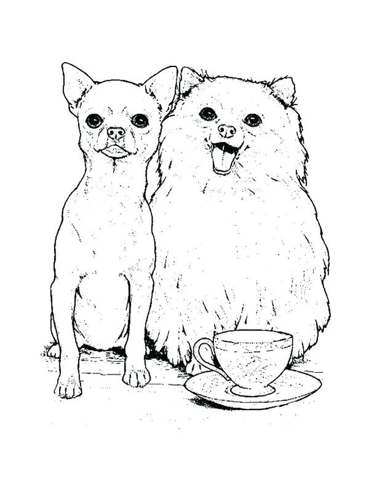 chihuahua coloring pages to print