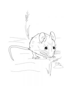 christmas mouse coloring page