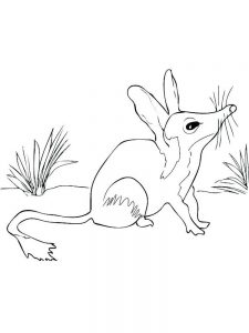 coloring pages free animals