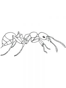coloring pages of ant to print