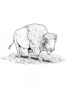 coloring pages of buffalo