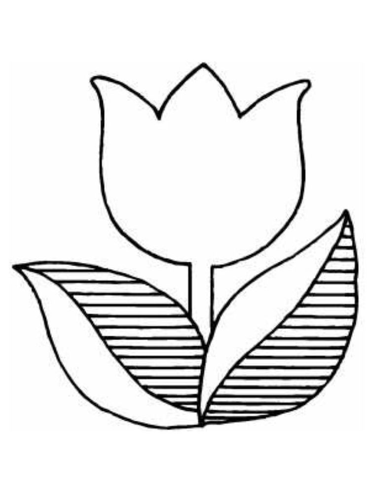 coloring pages tulip