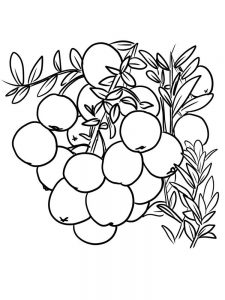 cranberries coloring picture print