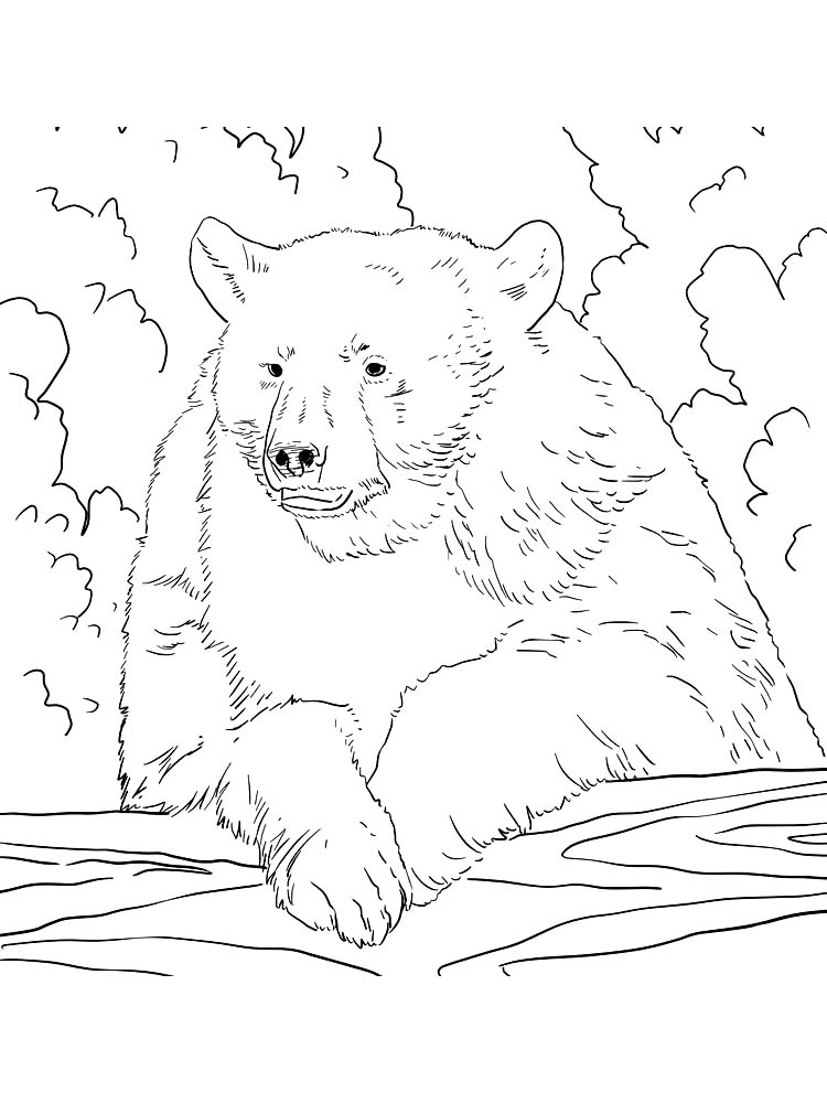 cranky bear coloring pages