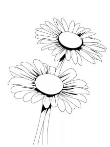 daisy coloring pages
