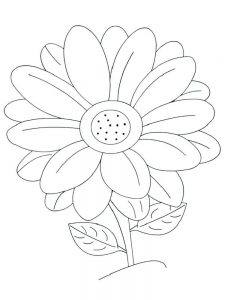 daisy flower colouring pages