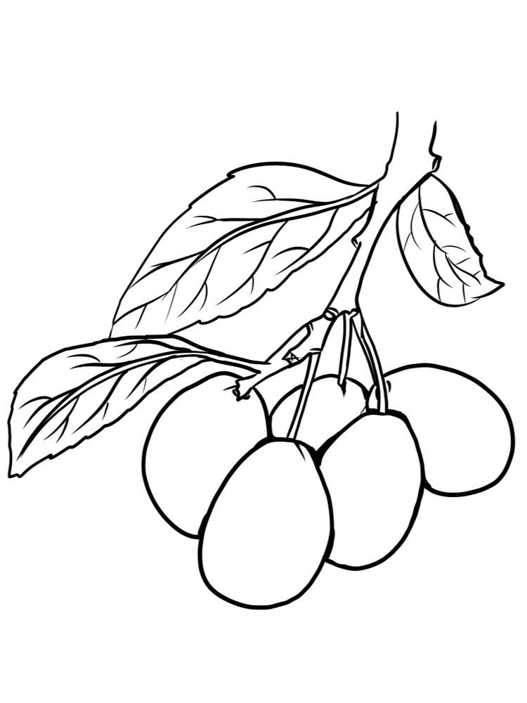 damson coloring page print