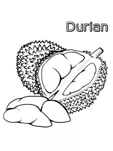 durian coloring page free