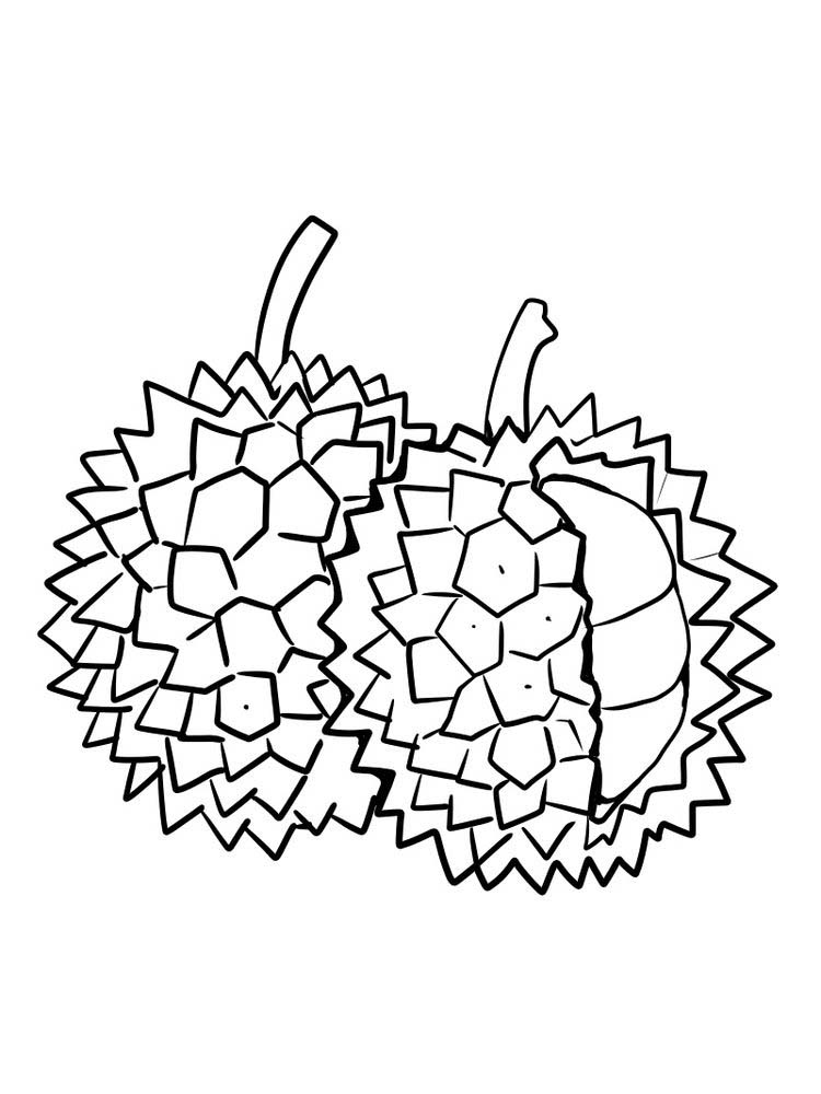 durian coloring picture print