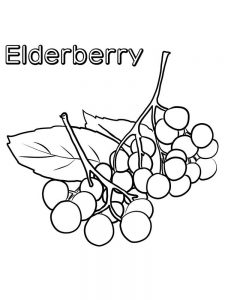 elderberry coloring images print