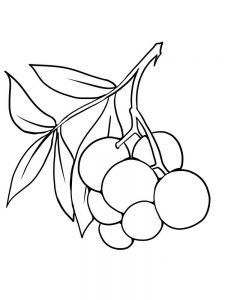 elderberry coloring page free print