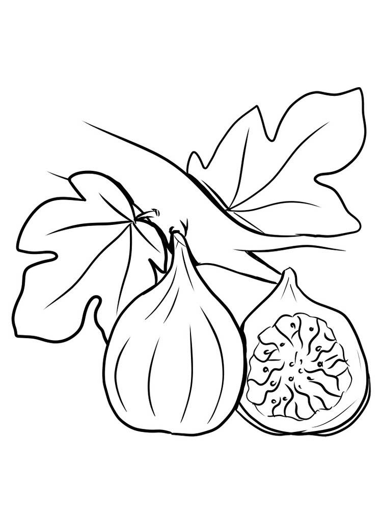 fig fruit coloring page print