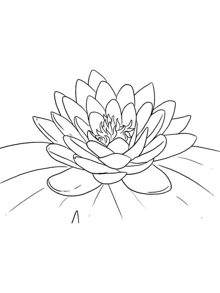 flower coloring pages hd