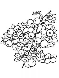 free cranberries coloring page print