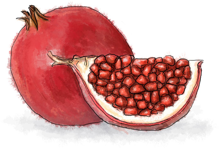 free pomegranate coloring page