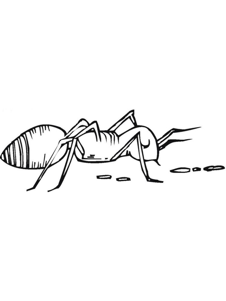 free printable ant coloring pages